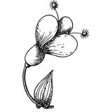 Fiore nel disegno di schizzo della matita Fotografie Stock