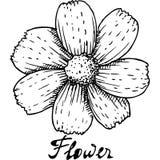 Fiore nel disegno di schizzo della matita Immagini Stock