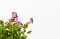 Fiore nel giardino Fotografia Stock Libera da Diritti