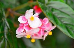 Fiore nel giardino della Nuova Zelanda immagine stock