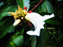 Fiore nel legno Fotografia Stock Libera da Diritti