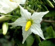fiore nel mio giardino Fotografia Stock Libera da Diritti
