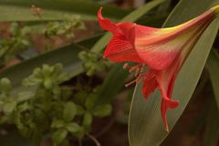 fiore nel mio giardino immagine stock