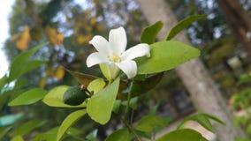 Fiore nel mondo fotografia stock libera da diritti
