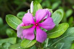 Fiore nel parco Fotografie Stock Libere da Diritti