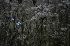 Fiore nel parco naturale di Vacaresti, Bucarest, Romania Fotografia Stock