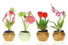 Fiore nel POT Fotografia Stock