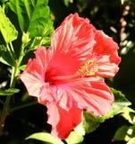 Fiore nel rosa fotografie stock libere da diritti