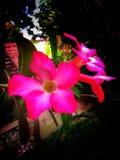 Fiore nel rosa fotografia stock libera da diritti