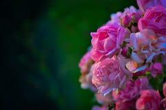 Fiore nel tramonto Fotografia Stock Libera da Diritti
