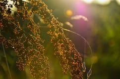 Fiore nel tramonto Immagine Stock