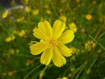 Fiore nel Vietnam Fotografia Stock