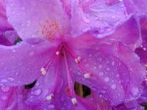 Fiore nell'alba Immagine Stock