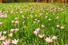 Fiore nell'amore Immagini Stock