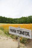 Fiore nell'azienda agricola Giappone di Tomita Fotografia Stock