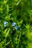Fiore nell'erba Fotografia Stock Libera da Diritti