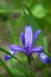 Fiore nell'erba Fotografia Stock