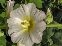 Fiore nell'immagine di sfondo del giardino immagini stock