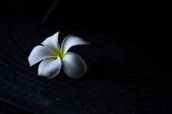 Fiore nell'oggetto scuro Fotografia Stock