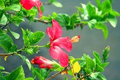 Fiore nella città Fotografia Stock