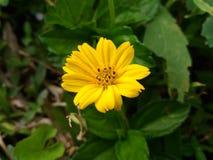 Fiore nella collina fotografie stock libere da diritti