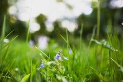 Fiore nella fine dell'erba verde su Immagine Stock Libera da Diritti