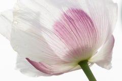 Fiore nella fine su Fotografie Stock