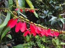 Fiore nella foresta pluviale del Perù Fotografia Stock Libera da Diritti