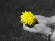 Fiore nella nerezza fotografie stock
