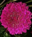 Fiore nella notte fotografie stock libere da diritti
