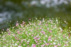 Fiore nella parte anteriore fotografia stock