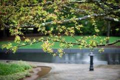 Fiore nella pioggia Immagini Stock Libere da Diritti
