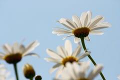 Fiore nella sorgente Fotografia Stock