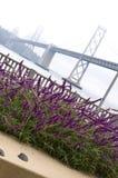 Fiore nella sosta Fotografie Stock Libere da Diritti