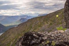 Fiore nelle montagne Fotografia Stock