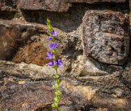 Fiore nelle rocce Fotografia Stock Libera da Diritti