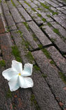 Fiore nelle stagioni primaverili per fondo Immagini Stock