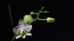 Fiore nello scuro Fotografia Stock