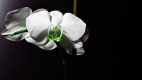 Fiore nello scuro Fotografie Stock Libere da Diritti