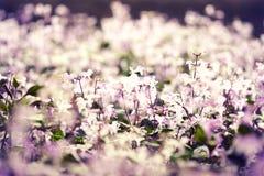 Fiore nello stile dell'annata Immagini Stock Libere da Diritti