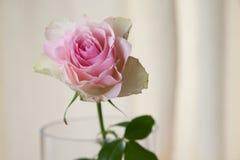 Fiore per il giorno del ` s della madre Fotografie Stock