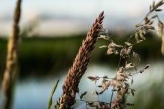 Fiore per il sole Fotografia Stock