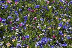 Fiore per l'immagine del fondo Immagine Stock