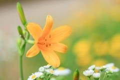 Fiore perfetto Immagine Stock