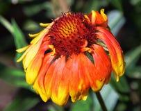 Fiore piacevole Fotografia Stock Libera da Diritti