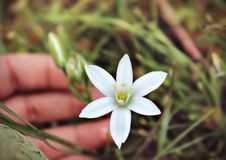 Fiore piacevole Fotografie Stock Libere da Diritti