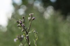 Fiore piacevole del prato Immagini Stock