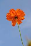 Fiore piacevole nel campo Fotografia Stock Libera da Diritti