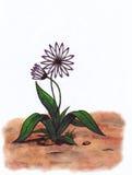 Fiore piacevole (Zen Pictures, 2011) Fotografia Stock