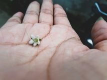 Fiore piccolo Fotografia Stock Libera da Diritti